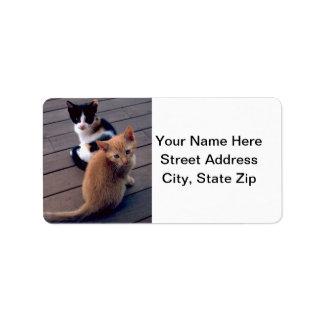 Etiqueta Chita e gatinhos alaranjados