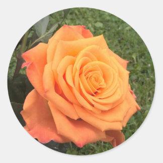 Etiqueta cor-de-rosa da foto da laranja bonita adesivo
