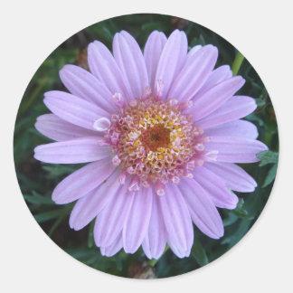 Etiqueta cor-de-rosa do círculo da margarida