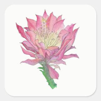 Etiqueta cor-de-rosa do quadrado da flor do cacto