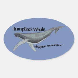 etiqueta da baleia de humpback