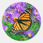 Etiqueta da borboleta de monarca adesivos redondos