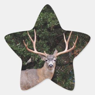 Etiqueta da estrela dos cervos adesito estrela