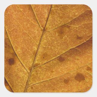 Etiqueta da foto da folha do outono do ouro adesivo quadrado