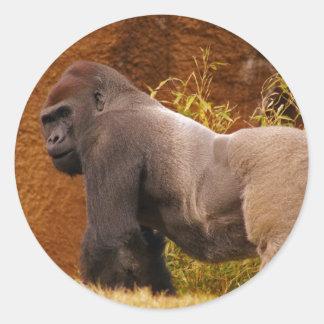 Etiqueta da foto do gorila do Silverback Adesivo Redondo