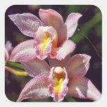 Etiqueta da orquídea do Cymbidium Adesivos Quadrados