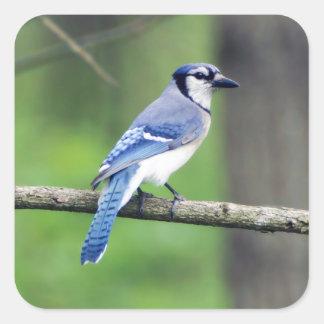 Etiqueta da pomba de Jay azul