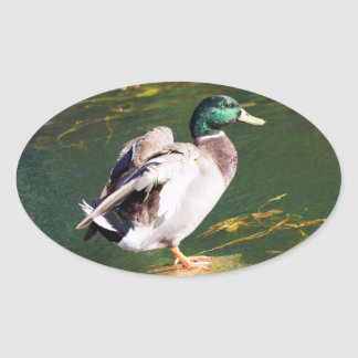 Etiqueta dada forma oval do pato do pato selvagem