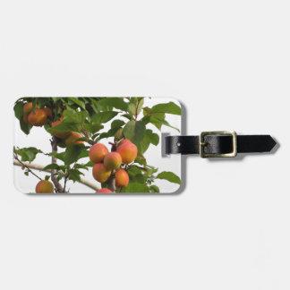 Etiqueta De Bagagem Abricós maduros que penduram na árvore. Toscânia,