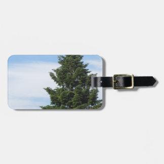 Etiqueta De Bagagem Árvore de abeto verde contra um céu claro