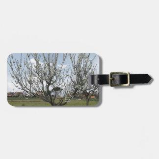 Etiqueta De Bagagem Árvore de pera de florescência no jardim Toscânia,