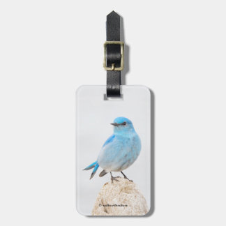 Etiqueta De Bagagem Bluebird bonito da montanha