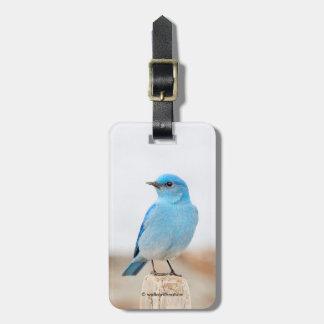 Etiqueta De Bagagem Bluebird bonito da montanha na praia