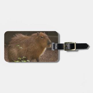 Etiqueta De Bagagem Capybara