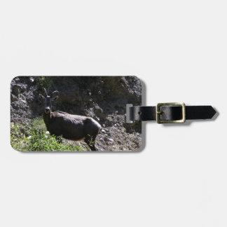 Etiqueta De Bagagem Carneiros de Bighorn da montanha rochosa, ovelha
