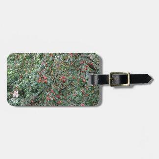 Etiqueta De Bagagem Cerejas vermelhas na árvore no pomar de cereja