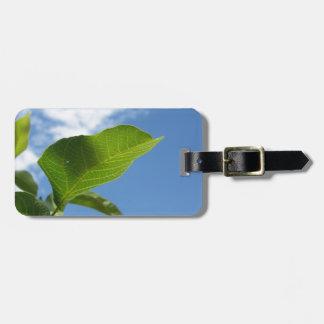 Etiqueta De Bagagem Close up da folha da noz iluminado pela luz solar