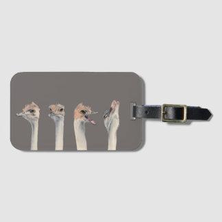 """Etiqueta De Bagagem Do """"pintura engraçada das avestruzes da rainha"""