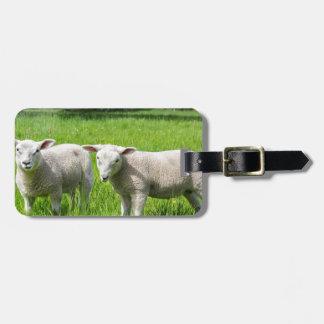 Etiqueta De Bagagem Dois carneiros holandeses brancos no prado verde