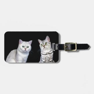 Etiqueta De Bagagem Dois gatos britânicos do cabelo curto no fundo