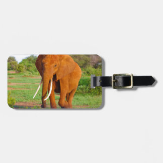 Etiqueta De Bagagem Elefante alaranjado bonito
