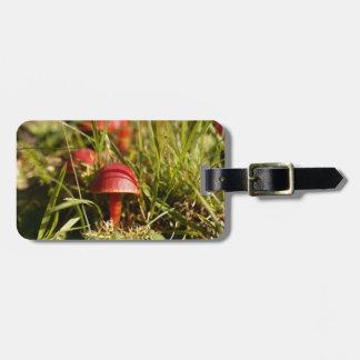 Etiqueta De Bagagem Escarlate dos fungos da capa, coccinea do