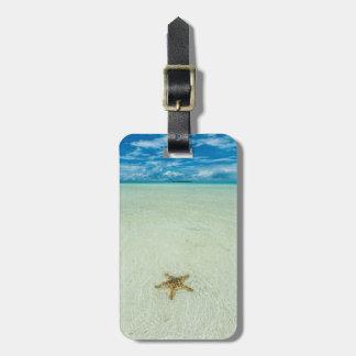 Etiqueta De Bagagem Estrela de mar na água pouco profunda, Palau