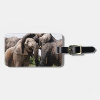 Etiqueta De Bagagem Família do elefante de África