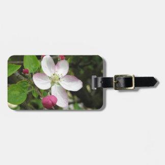 Etiqueta De Bagagem Flor cor-de-rosa da maçã no primavera. Toscânia,