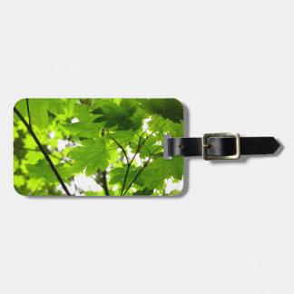 Etiqueta De Bagagem Folhas de bordo com pingos de chuva