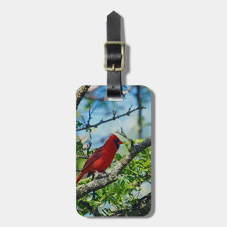 Etiqueta De Bagagem Fotografia selvagem cardinal vermelha do pássaro