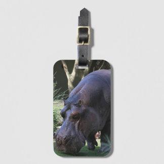 Etiqueta De Bagagem Hipopótamo AJ17