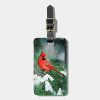 Etiqueta De Bagagem Homem cardinal do norte na árvore, IL