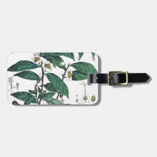 Etiqueta De Bagagem Impressão botânico do chá verde do vintage