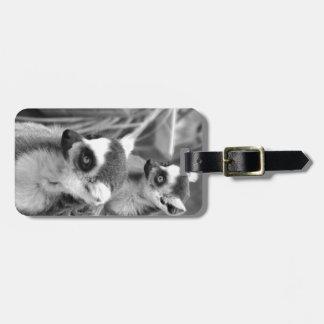 Etiqueta De Bagagem lemur Anel-atado com o bebê preto e branco