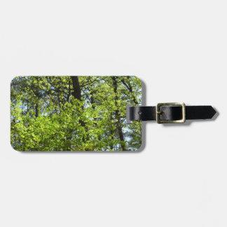 Etiqueta De Bagagem Natureza verde das folhas de bordo do primavera