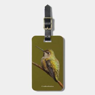 Etiqueta De Bagagem O colibri de Anna no escarlate de Trumpetvine