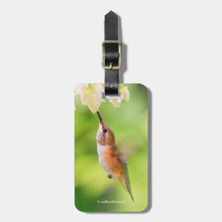 Etiqueta De Bagagem O colibri Rufous sorve o néctar da flor do mirtilo