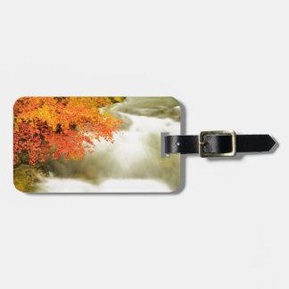 Etiqueta De Bagagem O desfiladeiro de Soteska Vintgar no outono