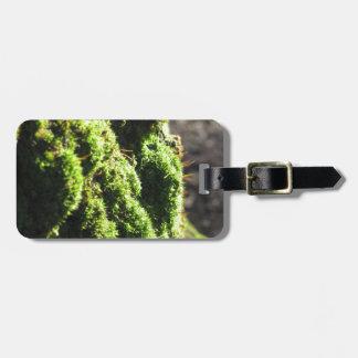 Etiqueta De Bagagem O musgo verde no detalhe da natureza de musgo