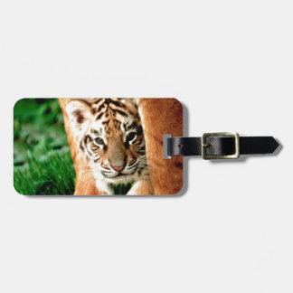 Etiqueta De Bagagem O tigre Cub de Bengal espreita para fora