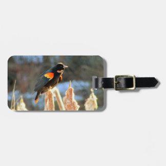 Etiqueta De Bagagem Pássaro preto voado vermelho no Cattail