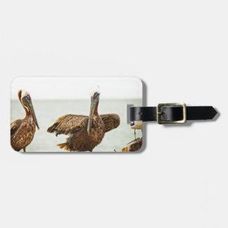 Etiqueta De Bagagem Pelicanos empoleirados em cargos