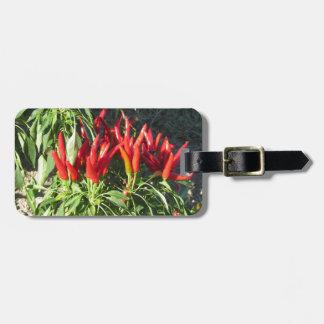 Etiqueta De Bagagem Pimentas vermelhas que penduram na planta.