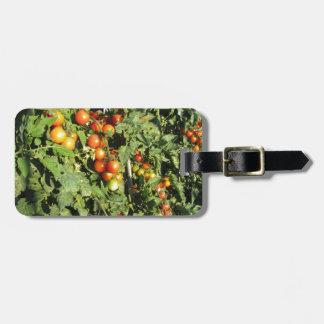 Etiqueta De Bagagem Plantas de tomate que crescem no jardim