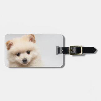 Etiqueta De Bagagem Pomeranian demasiado bonito