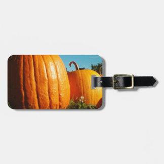 Etiqueta De Bagagem Pumpkins_Hancock_Shaker_village_2418
