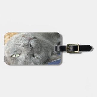 Etiqueta De Bagagem Relaxe! Tag de ronrom cinzento da bagagem do gato