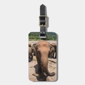 Etiqueta De Bagagem Retrato do grupo do elefante, Sri Lanka