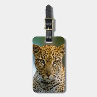 Etiqueta De Bagagem Retrato do leopardo